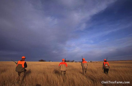 Pheasant Hunting at Oak Tree Lodge in Clark, South Dakota