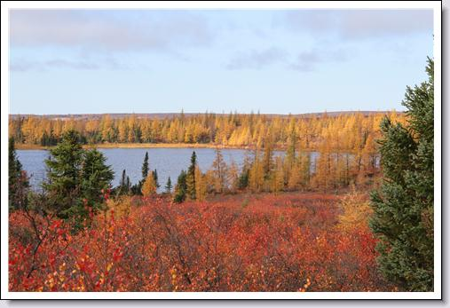 Fall colours on the tundra in Northern Manitoba, Webber's Lodges