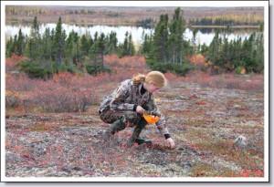 Tundra Moss