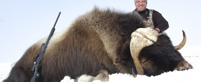 Russ Mehling with spring Musk Ox. Boone and Crockett!