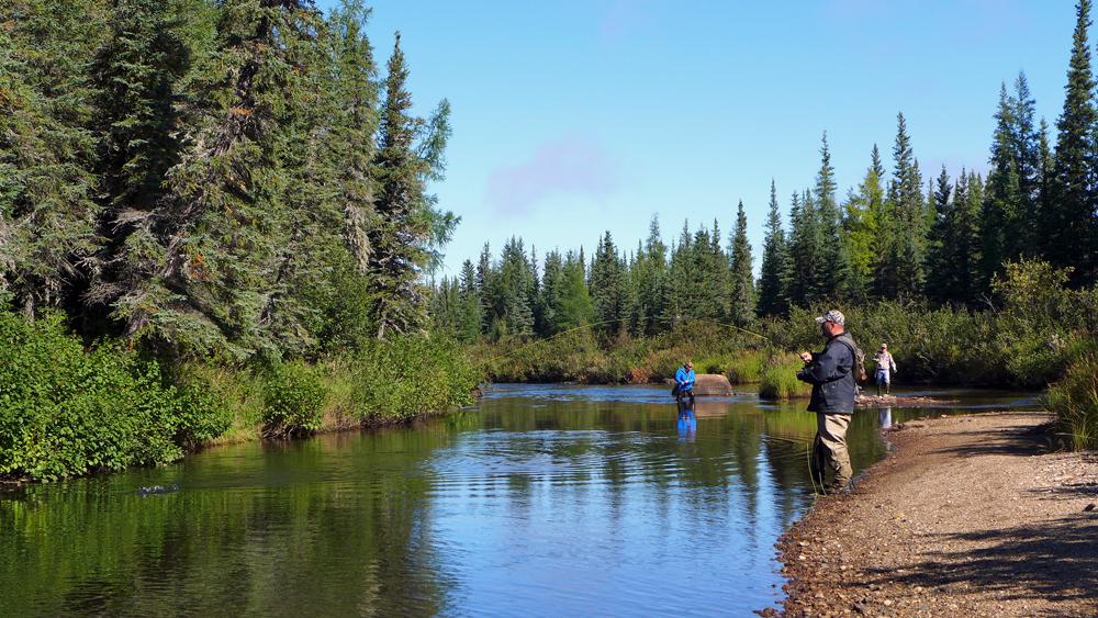 Sea-run brook trout. On!